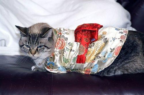 Новый фототренд в Японии: кошки в кимоно (21 фото)