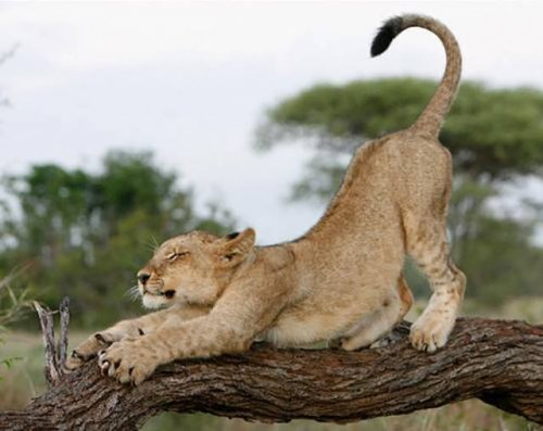 Дикие животные, в которых невозможно не влюбиться (21 фото)