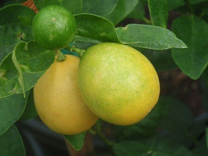 Фото фруктовой жопы 23 фотография