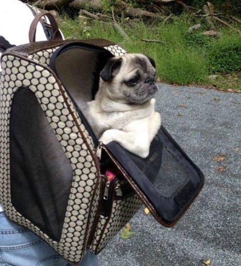 Животные в рюкзаках (10 фото)