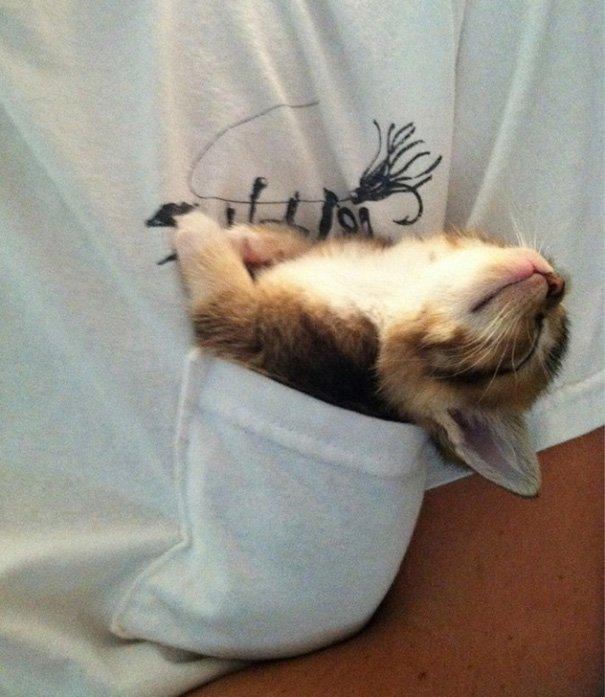 котики смешные спят фото до слез одежды ней были