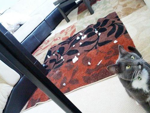 Кошки, которые любят похулиганить (28 фото)