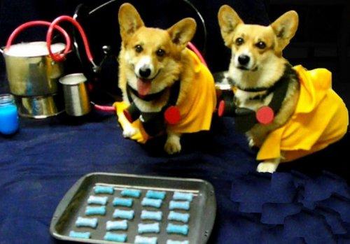 Домашние животные, которым нравится сериал Breaking Bad (10 фото)