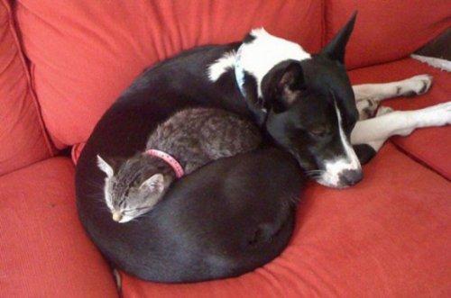 Любовь и дружба в мире животных (13 фото)