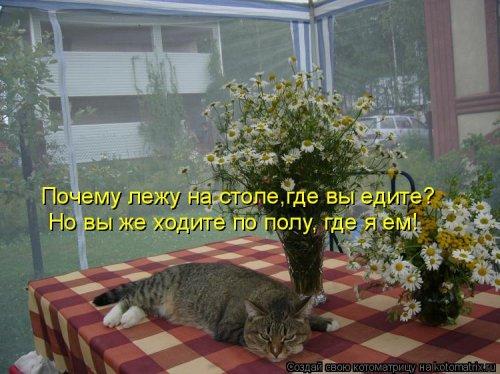 Свежая прикольная котоматрица (34 фото)