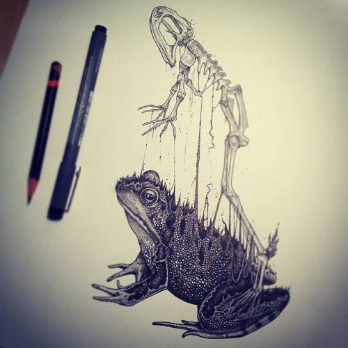 Анатомические рисунки животных Пола Джексона (11 фото)