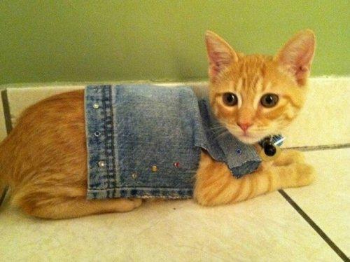 Кошки в дениме (11 фото)