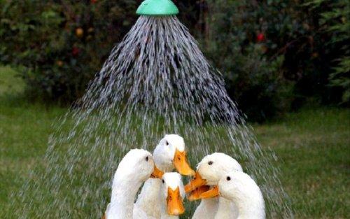 Животные, которым летняя жара нипочём (22 фото)