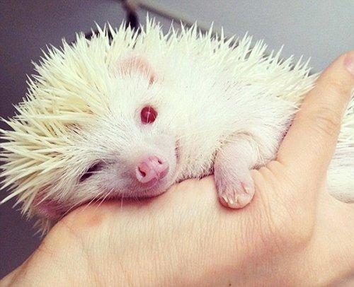Топ-11: Необычные животные-альбиносы