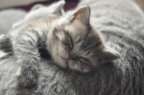 Самые довольные кошки в Интернете (29 фото)