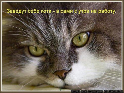 Новая котоматрица для всех (23 фото)