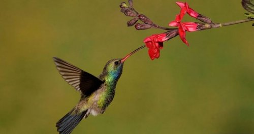 Дикая природа через фотообъектив (25 фото)