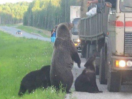 Это Россия, детка… (26 фото)
