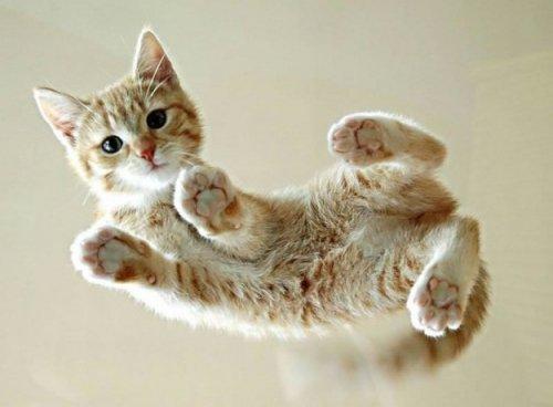 Забавные кошки на стекле: вид снизу (22 фото)