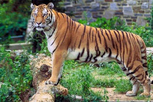 Топ-12: Зоопарки, потерявшие контроль над своими животными