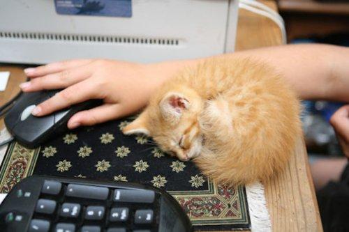 Спящие котята (34 фото)