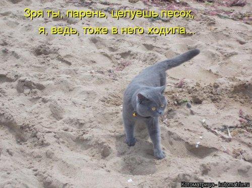 Новая котоматрица на Бугаге (32 фото)