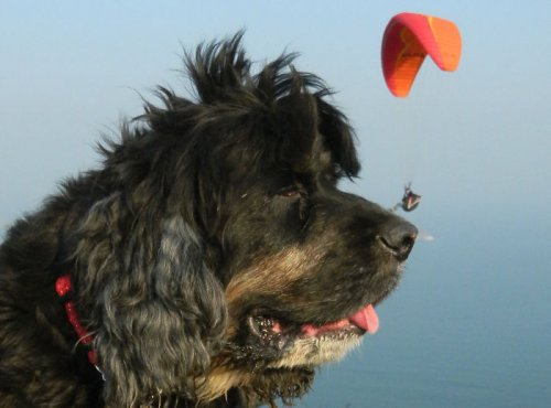 Собаки, которые на снимках выглядят гигантами (19 фото)