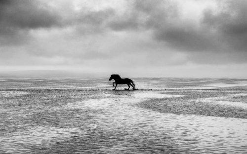 Великолепные лошади в фотографиях Керри Хендри (12 фото)