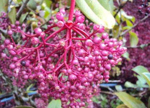 Топ-10: Редкие и необычные сорта винограда