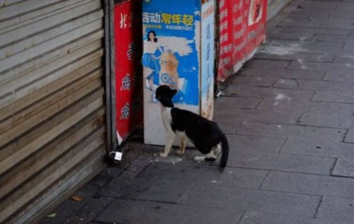 Кот, который знает, где взять вкусную еду (9 фото)