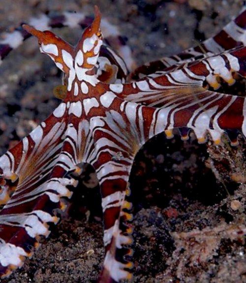 Топ-10: Удивительные и необычные осьминоги