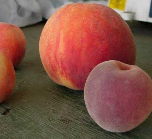 Топ-10: Странные, редкие и необычные персики