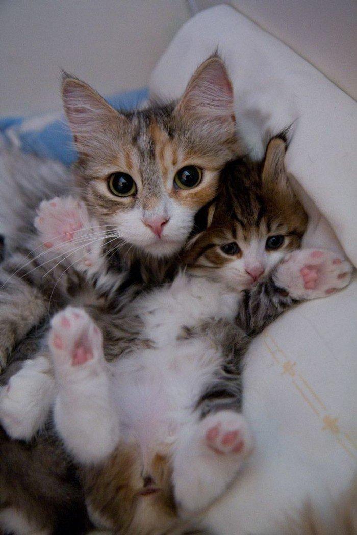 кошка с котятами двумя фото растения