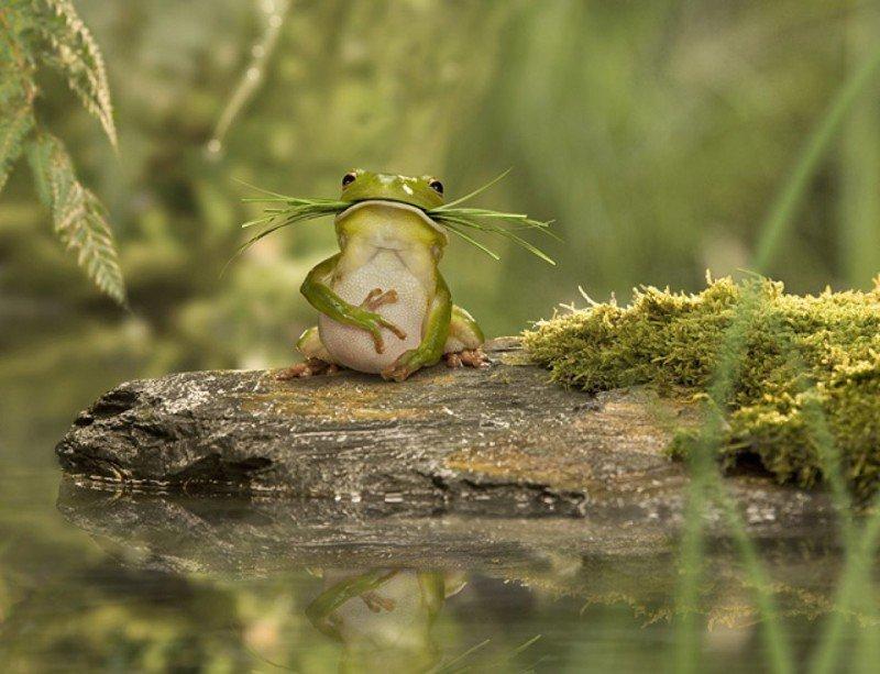 третей смешные фото с жабами человеку