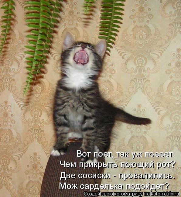 Обиженный котенок картинки
