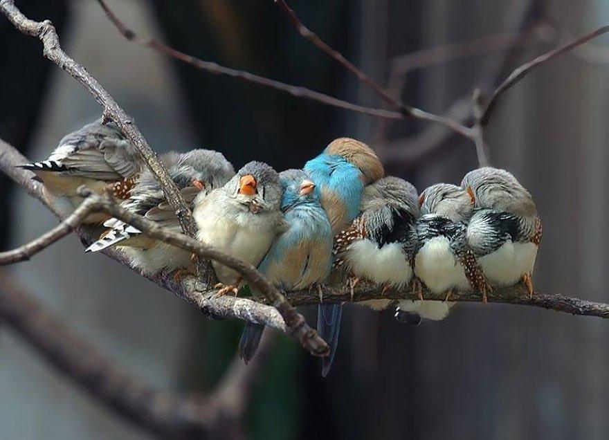 общем, уставшие птицы картинка для соколовский успел