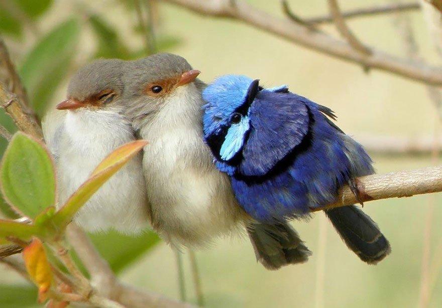 фольклор всех картинки классных птиц более прохладных северных