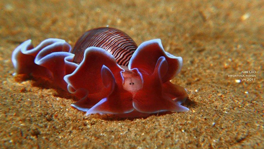 Улитка – описание, аквариумные виды, чем питается, обитает.