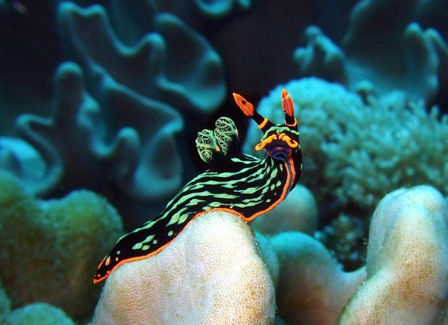 моллюски морские фото