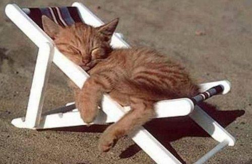 Кошки, знающие толк в летнем отдыхе (10 фото)