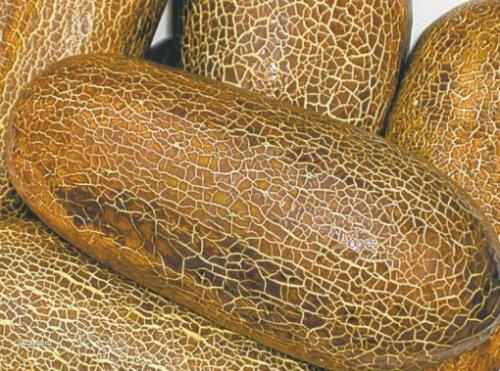 Топ-10: Редкие и необычные огурцы