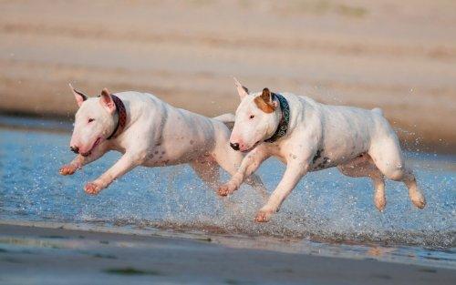 Топ-10: Самые некрасивые породы собак