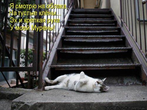 Лучшая котоматрица недели (30 фото)