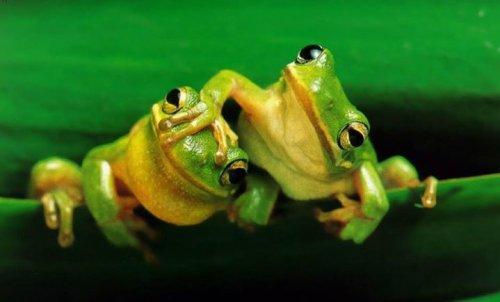 Забавные лягушки в фотографиях (20 фото)