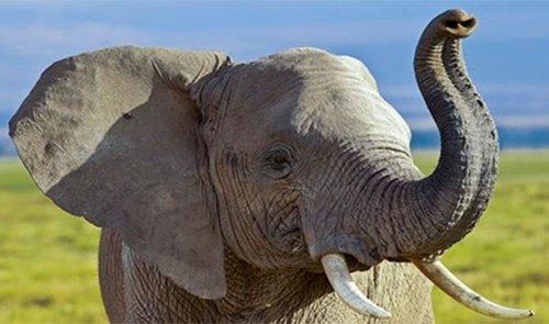 Топ-25: Странные повадки животных, о которых вы не знали