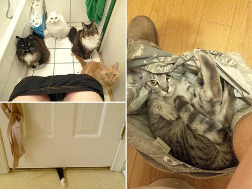 Домашние животные, которые не оставят в одиночестве (13 фото)