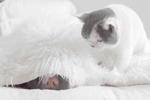 Лучшие друзья — шарпей Пэддингтон и кот Батлер (18 фото)