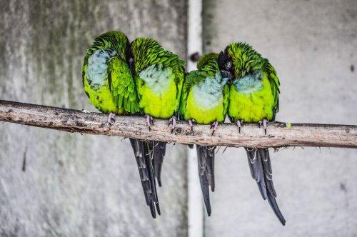 Согревающие душу фотографии греющихся сообща птичек (24 фото)