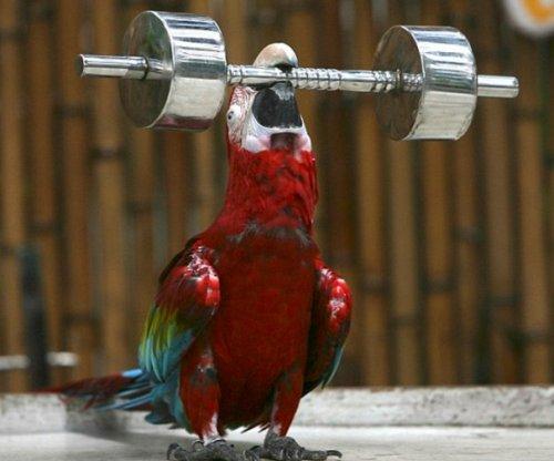 Животные-бодибилдеры (10 фото)