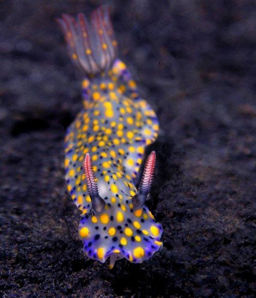 Потрясающе красивые морские моллюски (31 фото)
