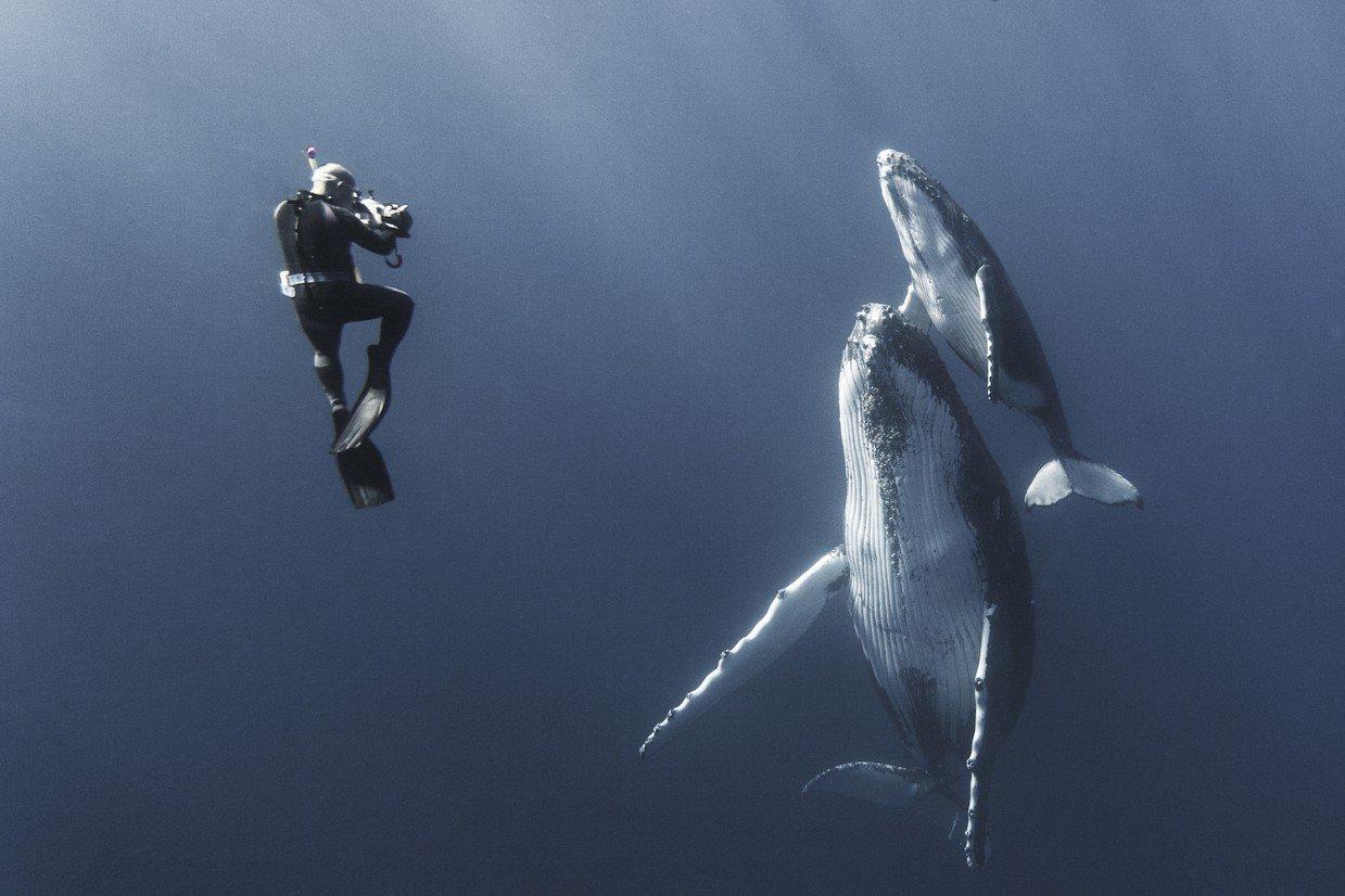 кит фото с людьми путь