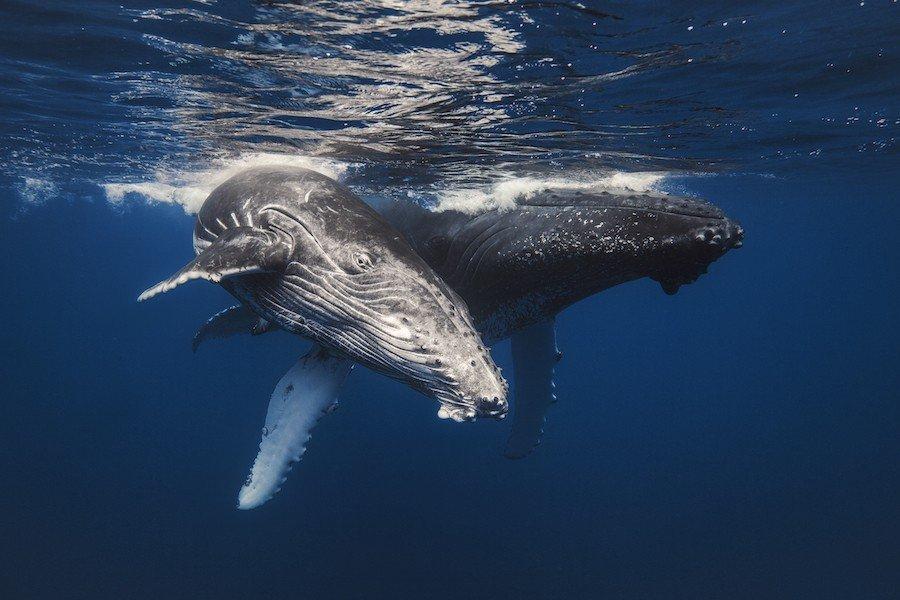 можно проводить картинки и фото китов в океане когда-нибудь попадали неловкую