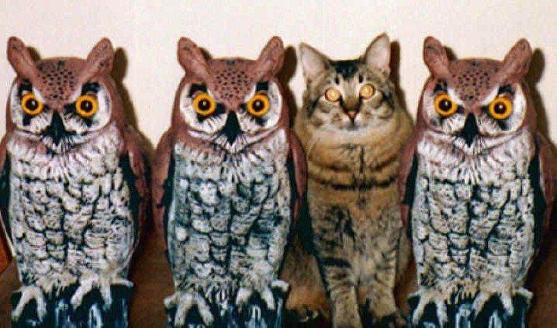 Картинки по запросу Эти животные думают что они мастера маскировки