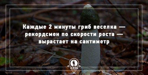 Факты про грибы, которые вы могли не знать (10 фото)