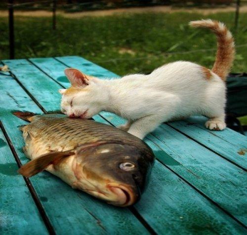 Фотографии с животными для поднятия настроения (25 шт)